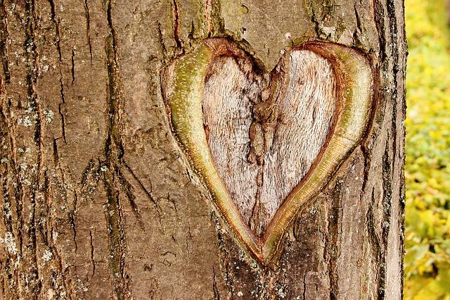 heart-402975_640