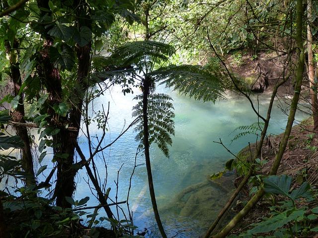 rainforest-515339_640