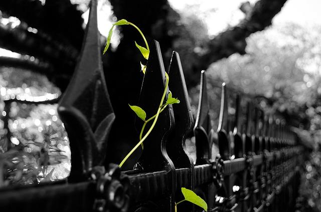 leaves-84664_640