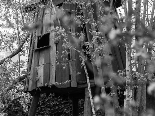 treehouse-1364512_640.jpg