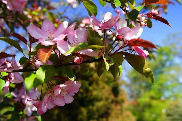 flourishing-289802_640.jpg