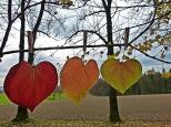 leaves-1849820_640