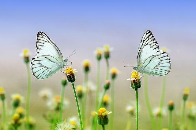 butterfly-1127666_640.jpg