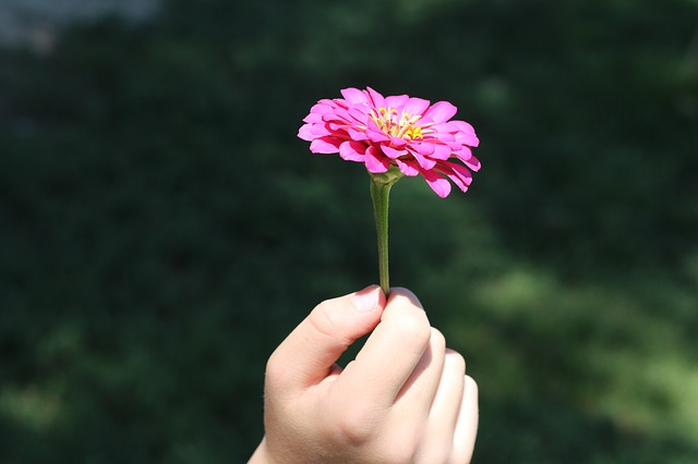 flower-574653_640.jpg
