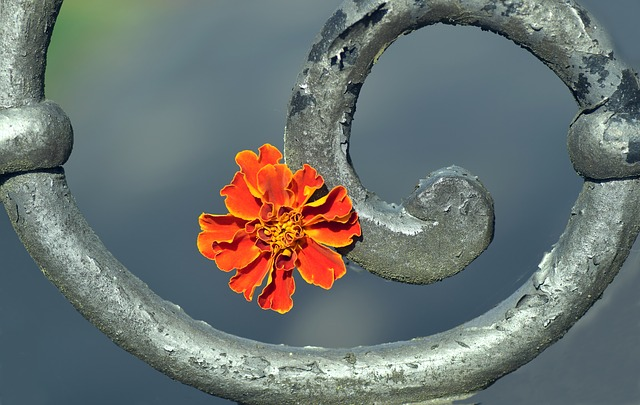 marigold-2440620_640.jpg